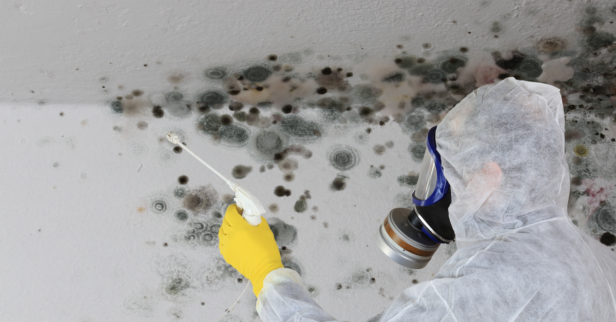 Mold Removal: Why Hire A Proven Expert