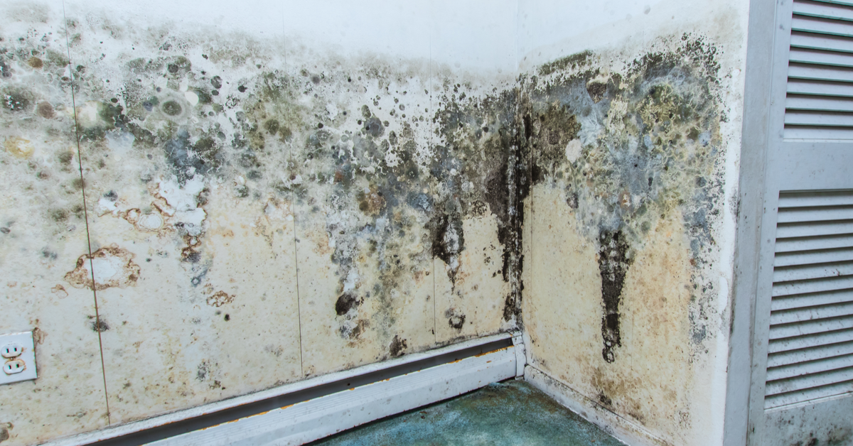 What Are Common Signs That You May Be Dealing With A Mold Issue?