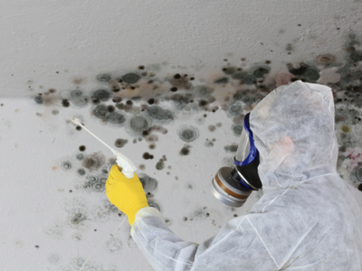 Mold Removal Charleston, SC Restored Air Disaster Solutions